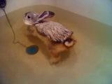 теперь ты видел все. кролик плавает